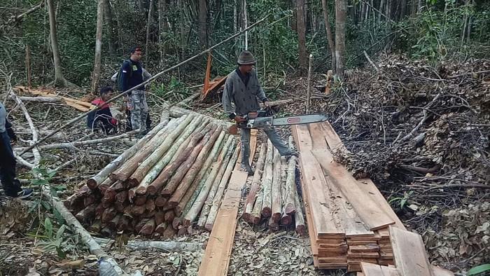 Lokasi perambahan hutan di Desa Tanjung Pernap, Kecamatan Tebing Tinggi Barat.