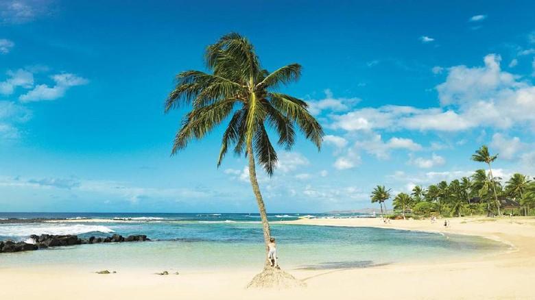 Di pulau ini bangunan tidak boleh lebih tinggi dari pohon for Bureau kawaii
