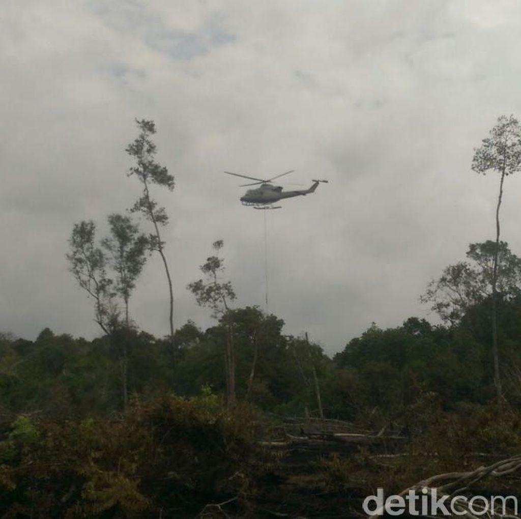 Pembakar Taman Nasional Konservasi Gajah di Riau Ditangkap
