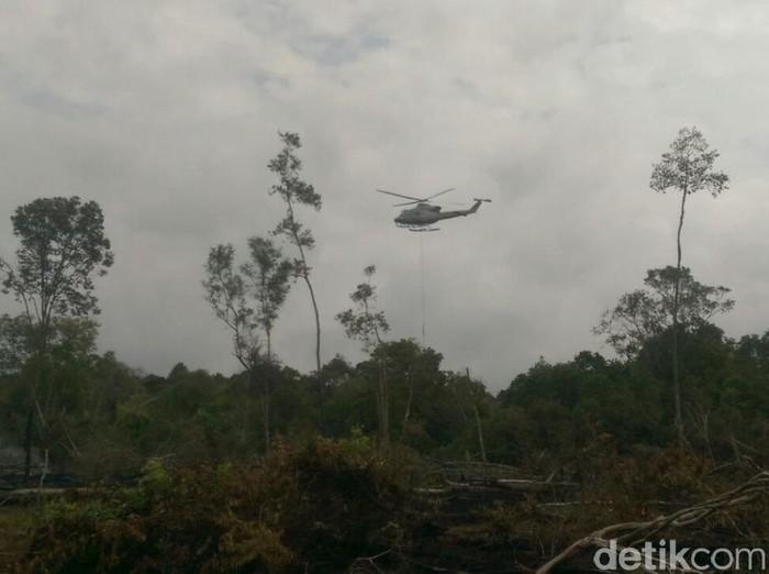 Ilustrasi Kebakaran hutan di Riau (Chaidir-detikcom)