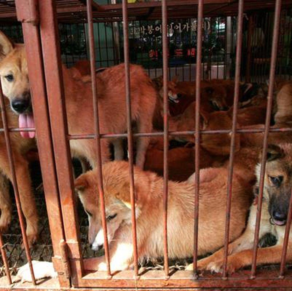 Keputusan Bupati Karanganyar Selamatkan 2.000 Anjing dari Pejagalan