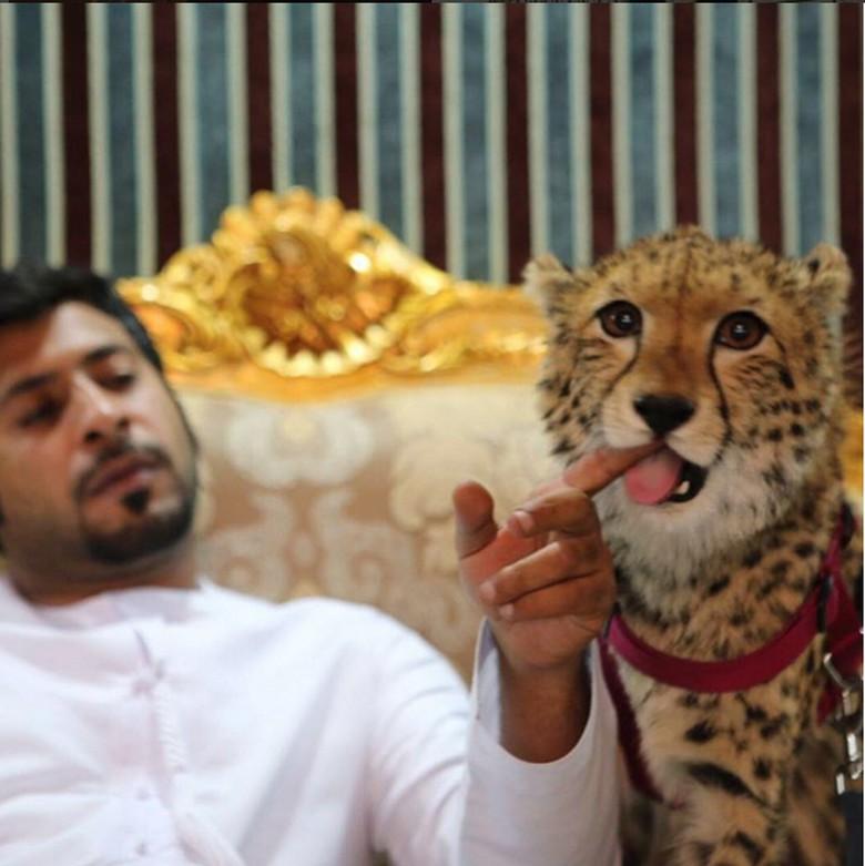 Dia adalah Humaid Abdalla yang diketahui tinggal di Dubai, Uni Emirat Arab. Rumahnyadipenuhi dengan hewan-hewan buas yang dipeliharanya. (Foto: Instagram/humaidalbuqaish)