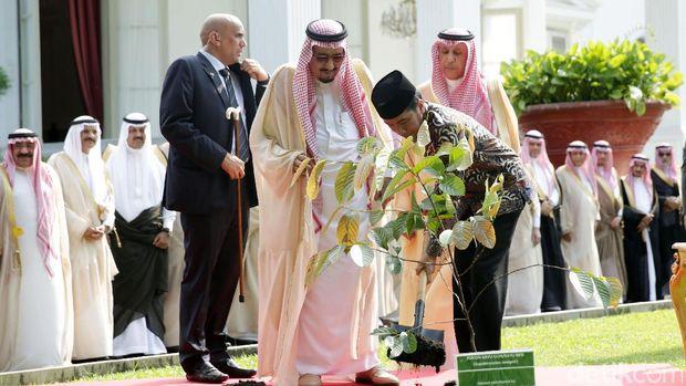 Raja Arab Saudi Salman bin Abdulaziz Al Saud saat menanam pohon di lingkungan Istana Kepresidenan bersama Presiden Jokowi