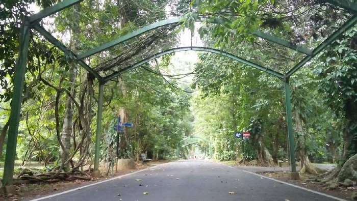 Penampakan Kebun Raya Bogor