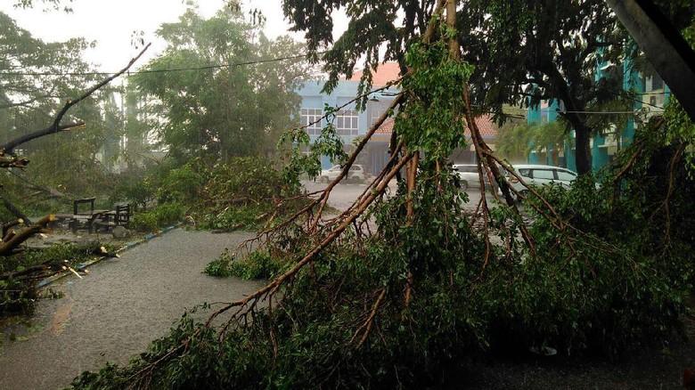 Hujan Angin Kembali Mengamuk di Surabaya, Pohon Bertumbangan