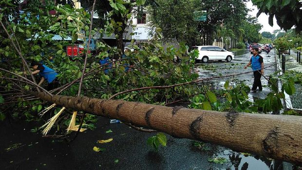 Hujan Angin Kembali 'Mengamuk' di Surabaya, Pohon Bertumbangan