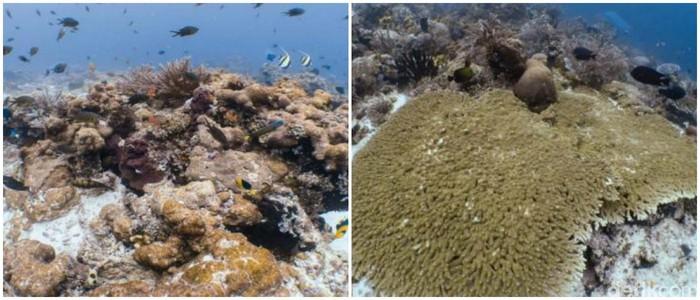 Terumbu karang sebelum rusak  (Dok. Humas KKP)