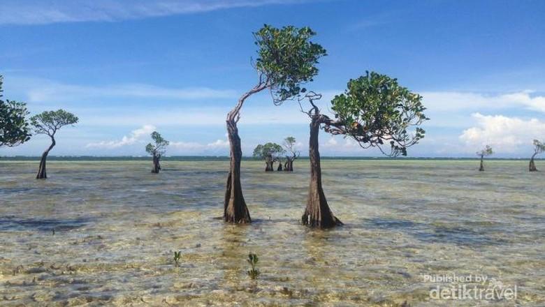 Pohon menari di Pantai Walakiri Sumba