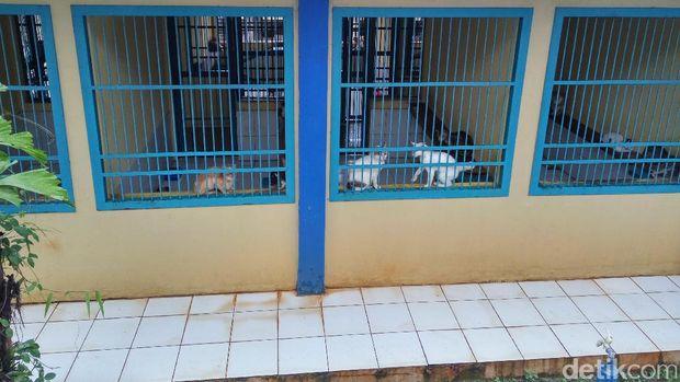 Para kucing di tempat penampungan Puskeswan