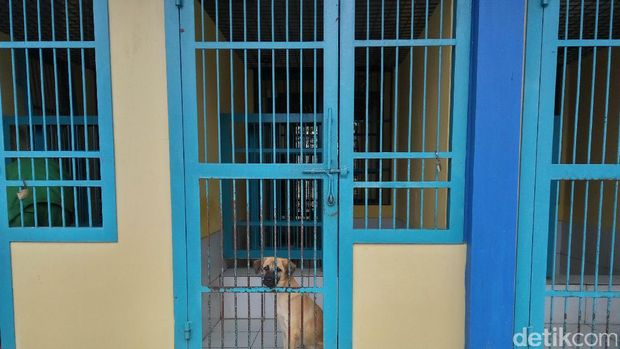 Menengok Tempat Penampungan Anjing dan Kucing Liar di Ragunan
