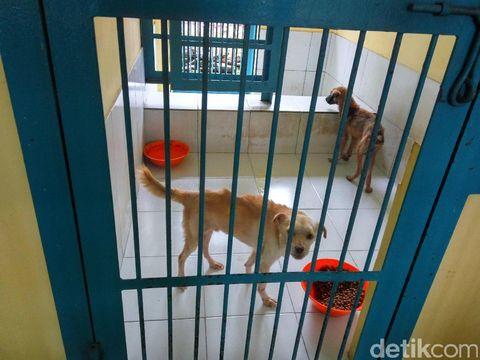 Anjing-anjing yang ada di tempat penampungan