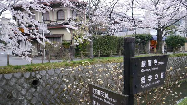 Letak jalan setapak yang ramai turis kala musim semi ini tak jauh dari Ginkakuji alias Kuil Paviliun Perak (Kurnia/detikTravel)