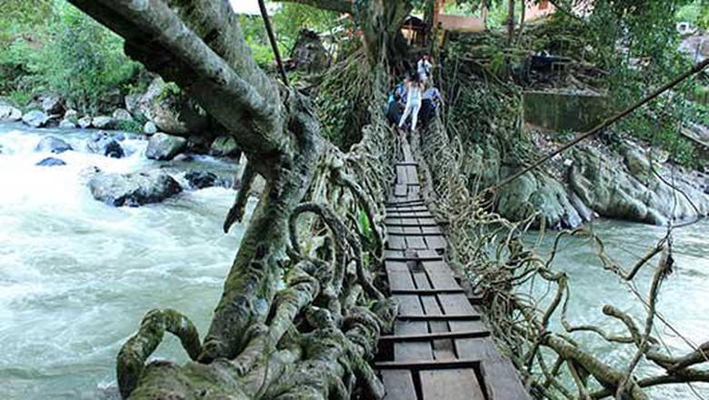 Jembatan akar Painan di Sumbar