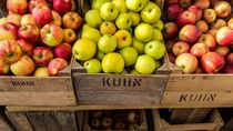 Ini 6 Makanan Khas Malang yang Bisa Jadi Buah Tangan Enak