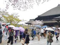 Desa-desa wisata di Jepang sudah menjadi destinasi wisata tujuan turis (Kurnia Yustiana/detikTravel)