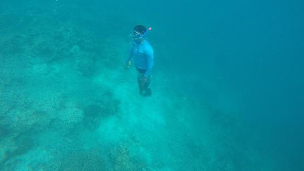 Punya surga bawah laut, kamu bisa snorkeling atau diving di Maratua (Bona/detikTravel)