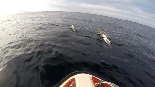 Kalau beruntung, kamu bisa lihat lumba-lumba saat hoping island (Bona/detikTravel)