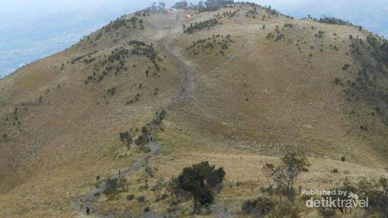 Berita Selandia Baru: Pendaki Asal Selandia Baru Dilaporkan Hilang Di Gunung Merbabu