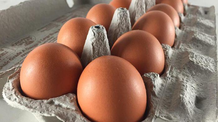 fakta telur ayam