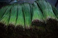 Nyam-nyam! Sumpit Kayu dari Rumput Ini Bisa Dimakan