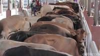 Cegah Virus Baru, China Buat Daftar Hewan Ternak yang Bisa Dikonsumsi