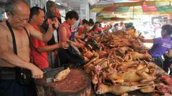 Pelopor! Shenzhen Larang Warga Makan Anjing dan Kucing