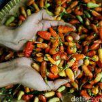 Harga Cabai Rawit Merah Makin Pedas, Dijual Rp 70.000/Kg