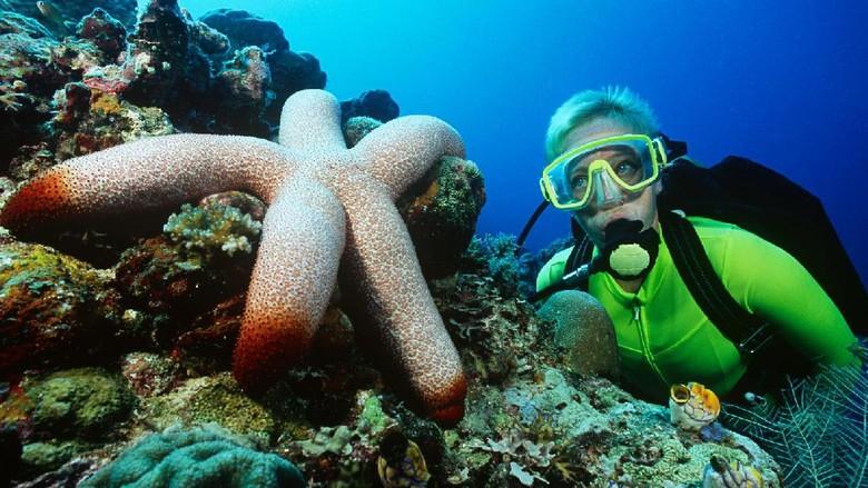 Foto: Ilustrasi diving (Thinkstock)