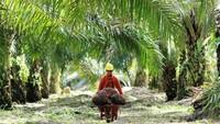 RI Gugat Uni Eropa soal Diskriminasi Kelapa Sawit