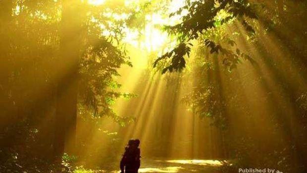 Hutan Cifor