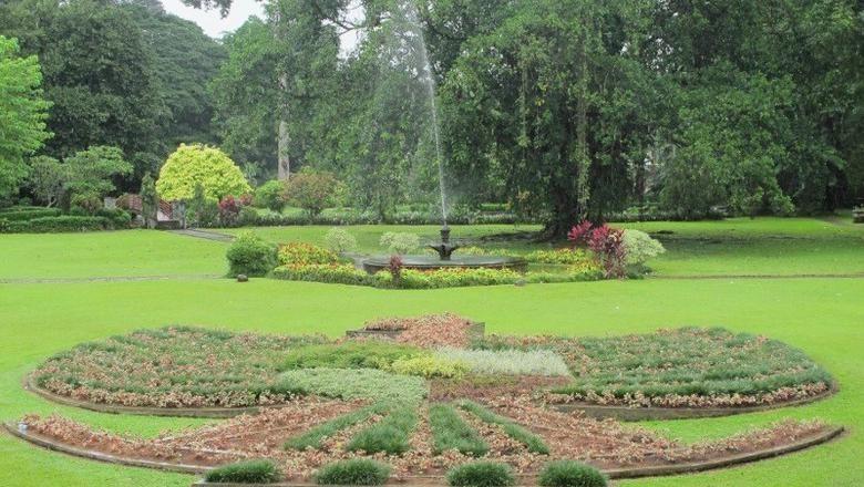 Ilustrasi Kebun Raya Bogor (Afif/detikcom)