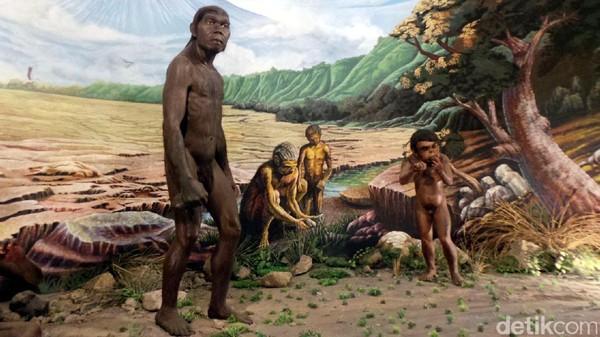 Display Homo erectus di Museum Manusia Purba Sangiran (Wahyu/detikTravel)