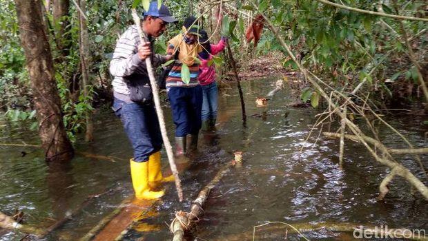 Novi keluar masuk hutan Kalimantan