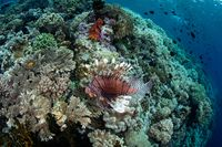 Dunia bawah laut yang indah di Wakatobi (Thinkstock)