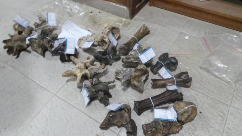 Foto: Fosil-fosil yang ditemukan warga (Wahyu/detikTravel)
