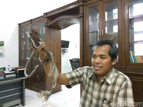 Warga Aceh Singkil Pancing Buaya 5 Meter, Kini Diamankan BKSDA