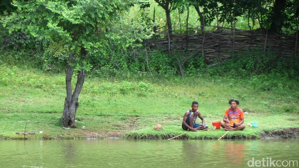 Di seberang danau, tampak warga sedang memandikan kerbau. Danau dengan nama unik ini ada di Kecamatan Kakuluk Mesak, sekitar 23 km dari pusat Kota Atambua (Fitraya/detikTravel)