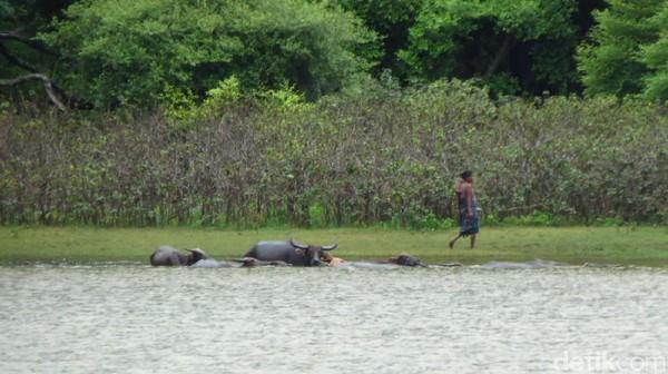 Danau Kolam Susuk relatif sepi meskipun akhir pekan. Beberapa orang tampak memancing, tapi mereka adalah warga lokal (Fitraya/detikTravel)
