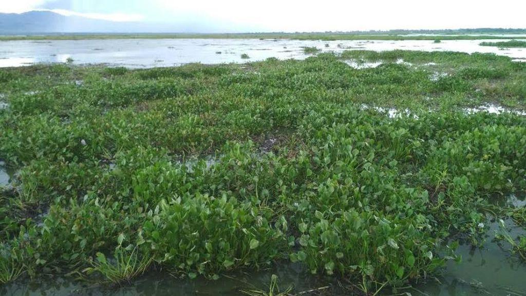 Menteri PUPR Larang Keramba di Danau Limboto