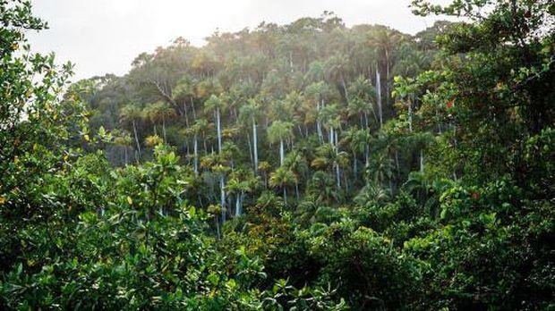 Hutan tropis di Kuba (Tanveer Badal/BBC Travel)