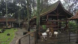 Sejuknya Dago Dream Park di Bandung