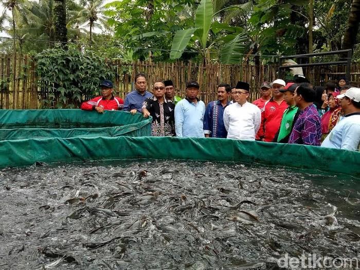 Banyuwangi Galakkan Budidaya Ikan Air Tawar Dengan Kolam Terpal