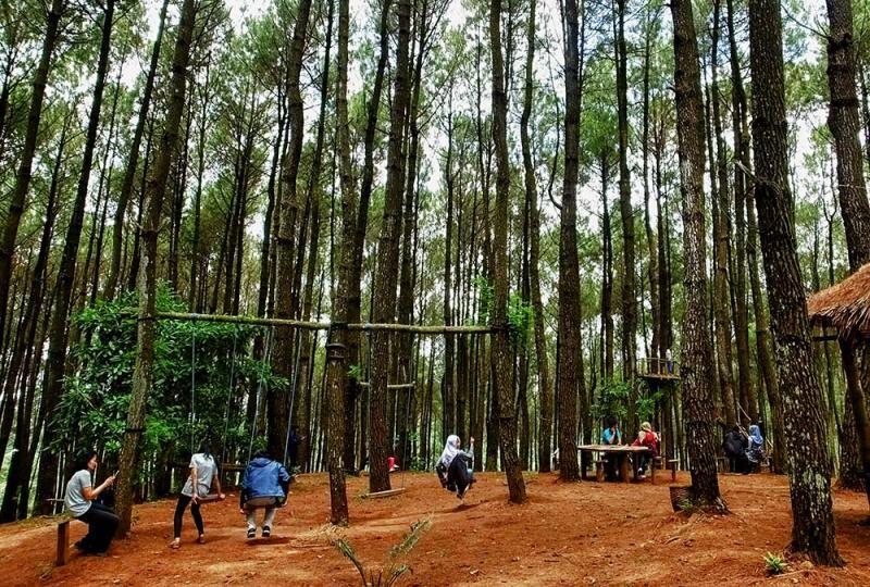 Inilah Hutan Pinus Pengger yang Instagramable di Bantul. Hutan pinus ini cocok dikunjungi traveler yang hobi foto-foto. (Pradito/detikcom)