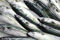 Ikan kembung dengan segudang manfaat untuk kesehatan.