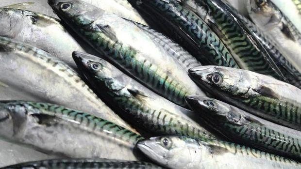Kembung Betelok, Sajian Ikan yang Langka dari Bangka