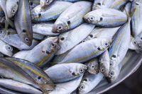 Tips memilih ikan kembung.