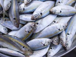 12 Manfaat Konsumsi Ikan Kembung Bagi Kesehatan, Bisa Dicoba!