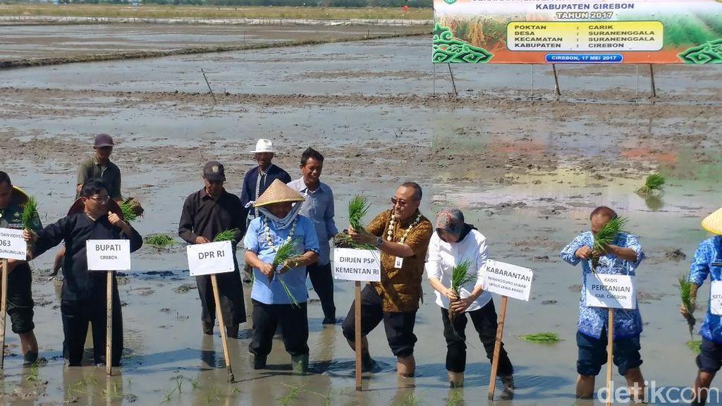 Penambahan Luas Tanam Padi di Cirebon Dipercepat