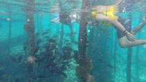 8 Tips dan Aturan Snorkeling