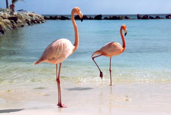 Di peringkat kedua ada Aruba yang dikunjungi 1,1 juta turis per tahun. Sedangkan warganya hanya 111 ribu (Thinkstock)